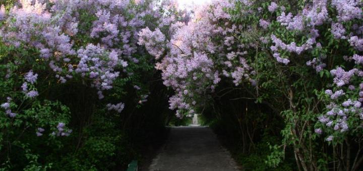 Сиреневая Весна в ПОЛТАВЕ - однодневный тур -09,15мая