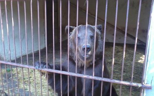 зоопарк А. Пылишенко